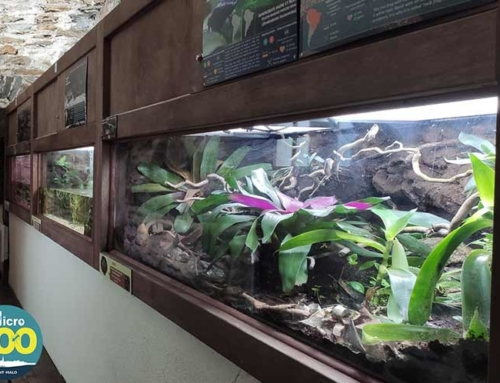 Un Micro Zoo au coeur d'Intra-Muros